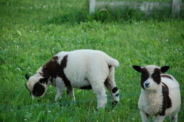 Our little lambs.
