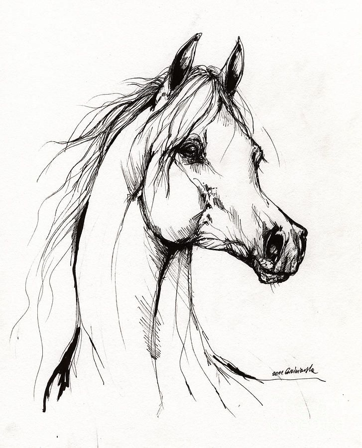 Arabian Horse Drawing 38 Drawing  - Arabian Horse Drawing 38 Fine Art Print