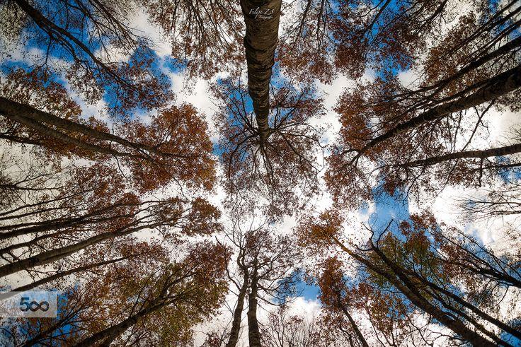 Mirando el cielo. by Felipe Zárate Simón on 500px