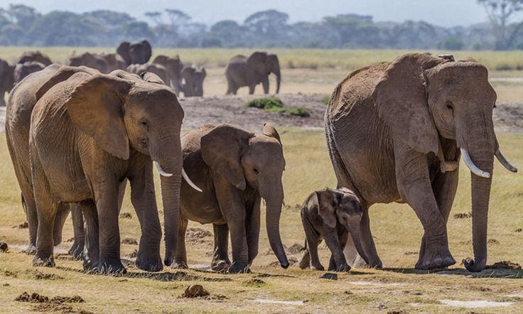 Funding to Crack Down on Illegal Ivory Trade Restored in Congressional Budget!