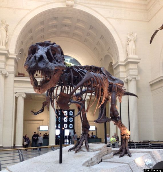 If You Only Have a Weekend in Chicago, Do This, Eat Here and Don't Go to Bed Early - Sue the T-rex
