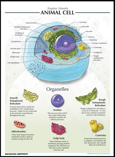 biology science cells - photo #1