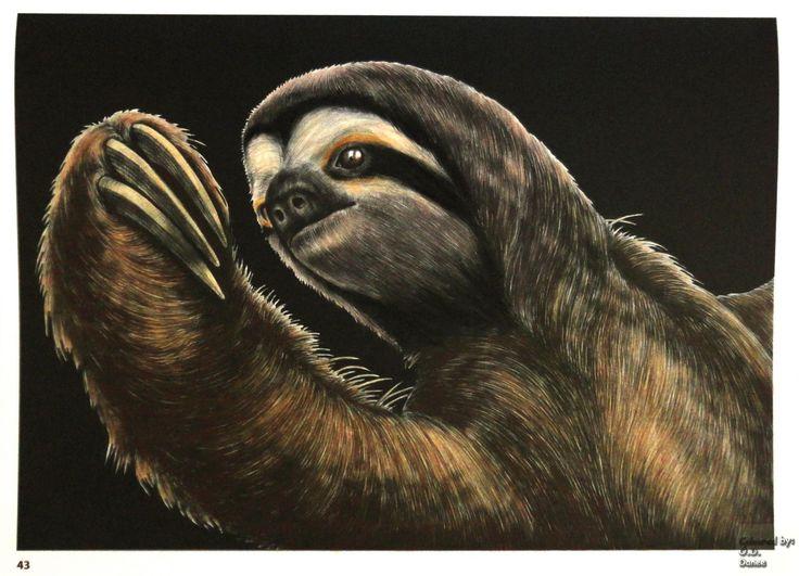 Tim Jeffs -  Intricate Ink Animals in Details volume 1   Sloth Coloured with Giotto Stilnovo Skintones pencils