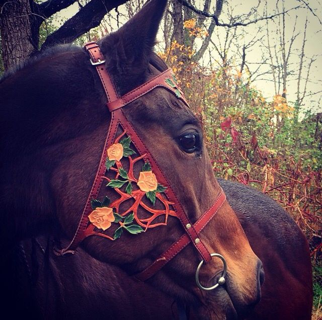 I LOVE this bridle,I want the same one for my horse