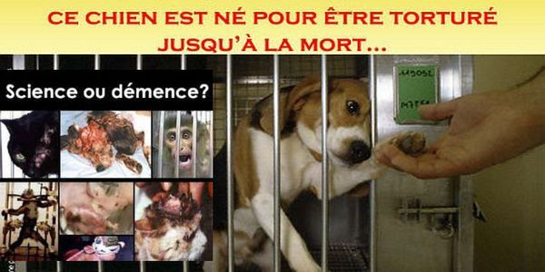 Get the Closure of Animal Experimentation Centre Hospital of Timone in Marseille. This little dog has been tortured till death!
