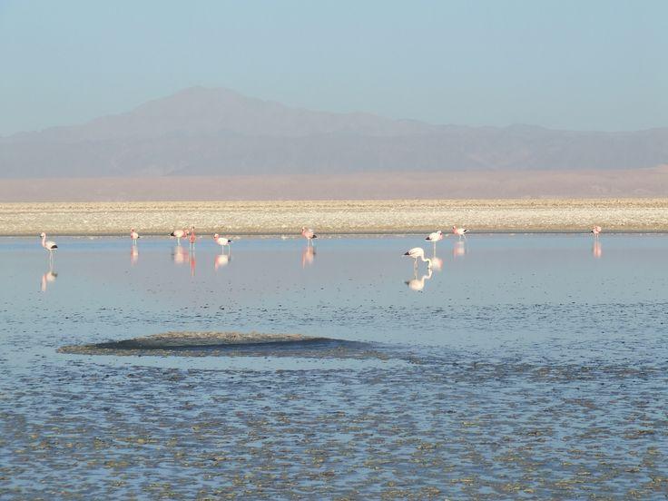 Reserva Nacional Los Flamencos, San Pedro de Atacama, Región de Antofagasta