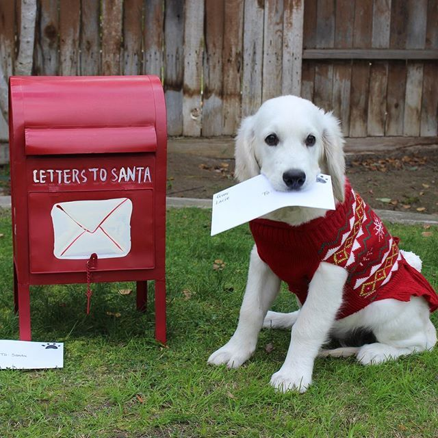 Dear Santa, I'll try to be better next year... I promise!!! Luv, Lacie P.S. I want a new baby doll & lots of treats!!!