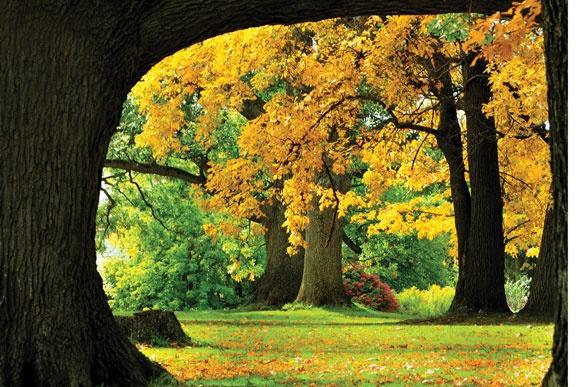 Autumn leaves – Belhurst Castle grounds on Seneca Lake  Robert Bilsky • Rochester
