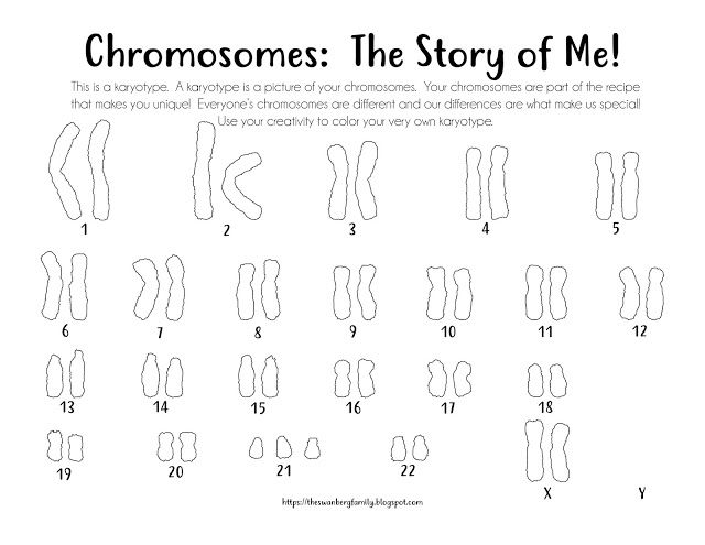 Karyotype Chromosome Coloring Sheets Pages Female With Down Syndrome Down Syndrome Activities Down Syndrome Day Chromosome
