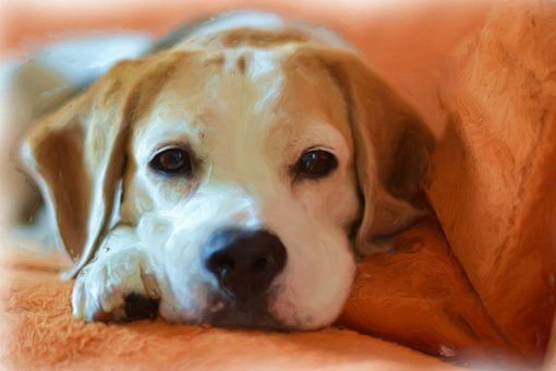 Pin On Beagles