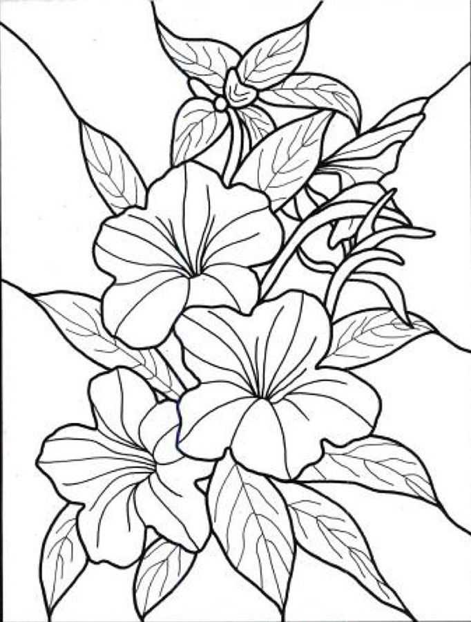 Tropical Flowers Stained Glass Coloring Book Hand Drawn - Coloring-pages-with-flowers