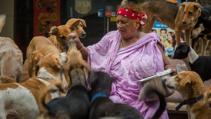 AN INDIAN woman feeds and looks after over 400 dogs – with 120 living with her in a shanty in New Delhi. The 'dog lady of New Delhi', Pratima Devi, is a rag picker and has chosen to dedicate her life to stray dogs.                                          Videographer / director: Shams Qari                     Producer: Haziq Qadri, Nick Johnson                     Editor: Marcus Cooper