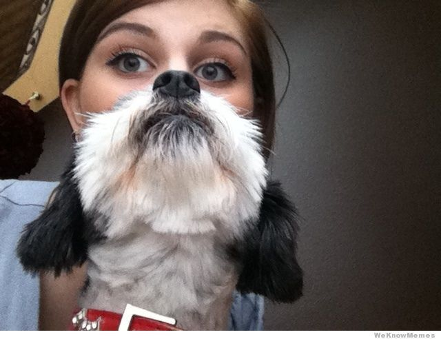 Forget cat beards: here are 15 of the most epic...