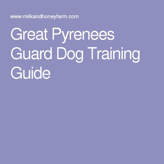 Great Pyrenees Guard Dog Training Guide