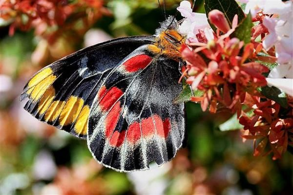 30 Beautiful Butterfly Pictures