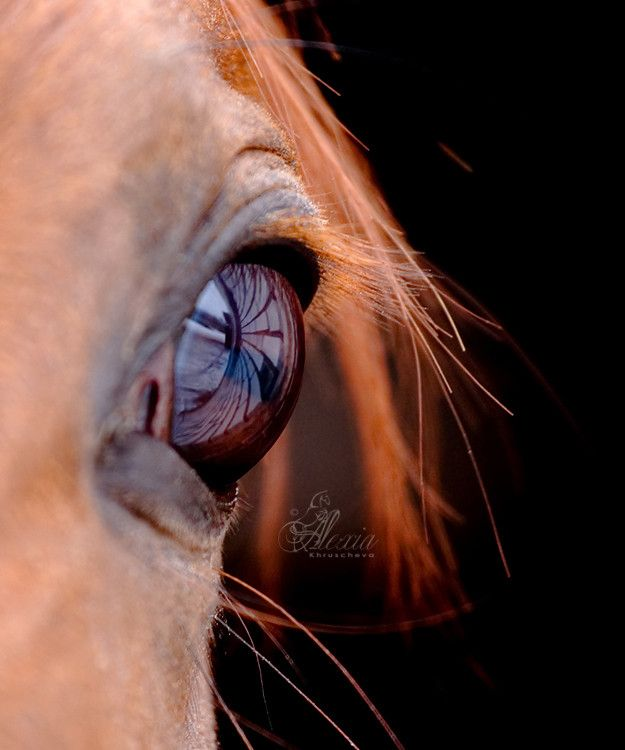 Glass World by Alexia Khruscheva, via 500px  : : Sussman and Wisdom found data using the Orrery which revealed that Pluto's orbit shows signs of chaos: Beautiful Horses, Picture, Brown Eyes, Horse S Eye, Horses Eyes, Photo, Drawing, Animal