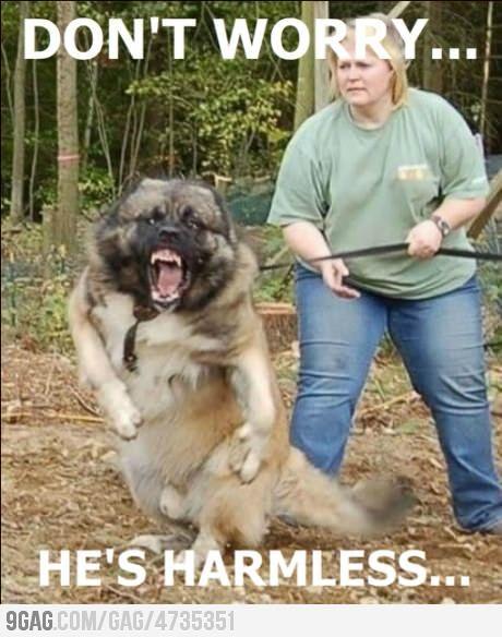 Nice Doggie, Cutest Dogs, Russian Caucasian, Mountain Dogs, Guard Dogs, Shepherd Dogs, Caucasian Ovcharka, Caucasian Shepherd, Horror Movie