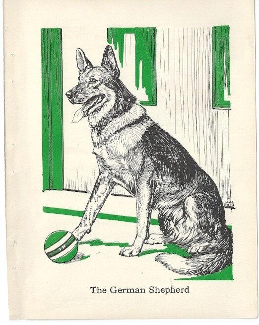 German Shepherd Dog  Illustration by Diana Thorne - 1940s original