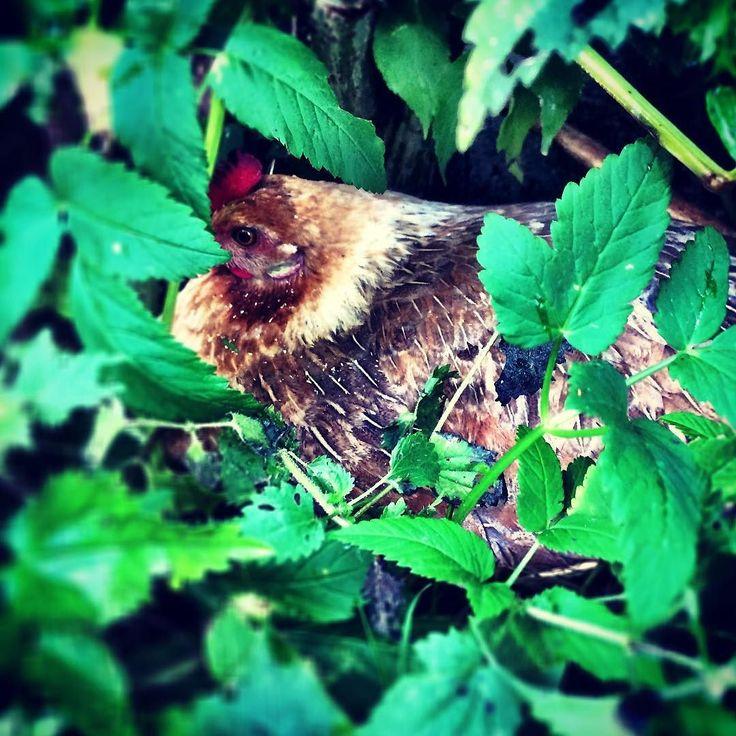 Var ute och skulle såga ner lite grenar med tigersågen och höll på att såga huvudet av den försvunna hönan som valt sig att lägga sig på ägg på ett väldigt dåligt ställe. Kallt och regnigt.  Det har ett fint isolerat Hönshus men icke .. suck. . . . #butikgul #gammaltosledet #polannet #bonnakafe #inredning #lantligt #loppis #loppisskåne #utflyktskåne #skåneloppis #retro #retrobutik #antik #återbruk #ekologiskt #återvinning #second hand #vinylskivor #mittskåne #hörby #kölleröd #loppisfynd…