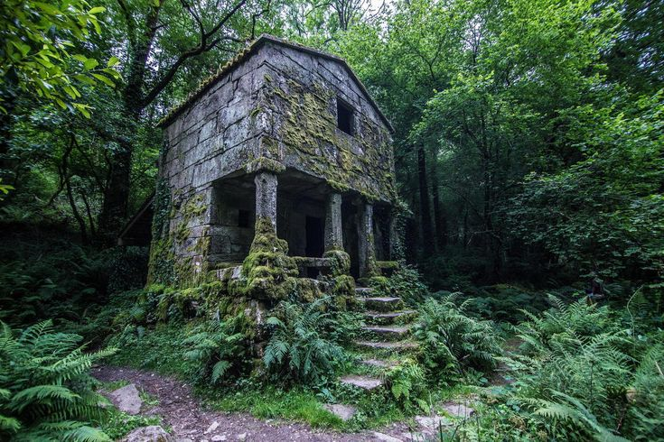 An overgrown structure deep in the forest of Galicia, Spain by Francisco Lopez