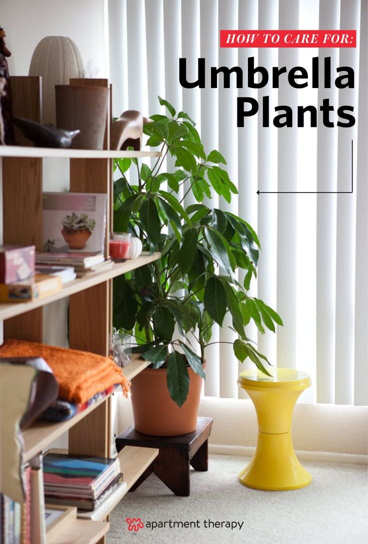 579 best images about plant filled homes on pinterest Indoor apartment plants