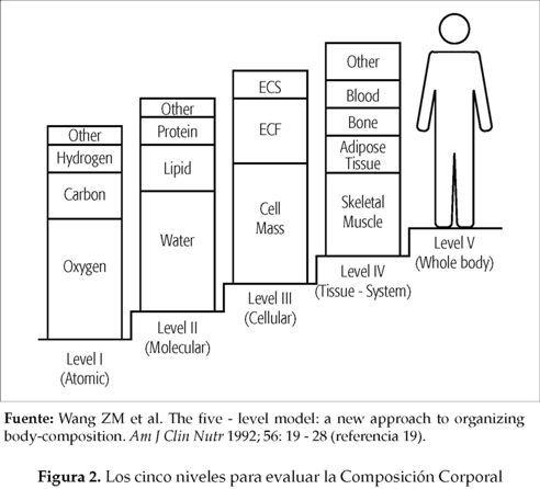 Composición corporal: su importancia en la práctica clínica y algunas técnicas relativamente sencillas para su evaluación | Martinez Marrero | Revista Científica Salud Uninorte