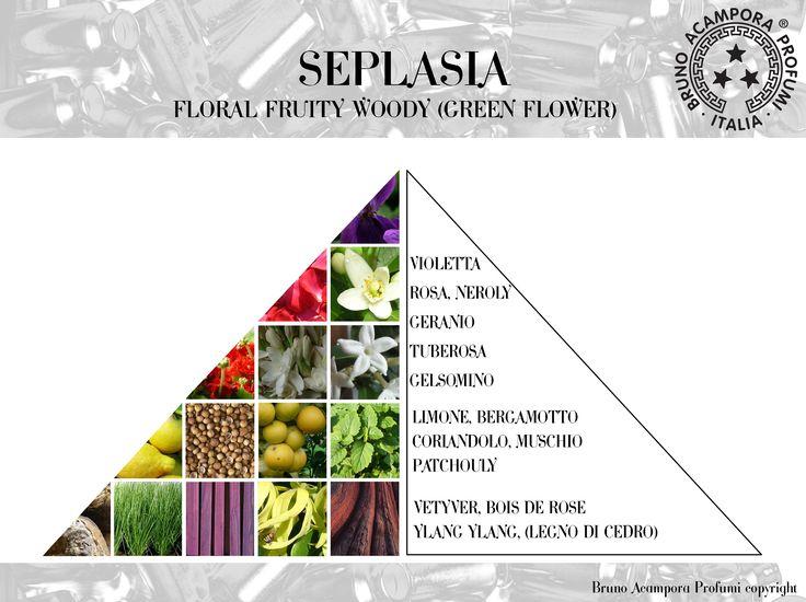 Seplasia - Pyramid #olfactorypyramid #pyramids #seplasia #piramidi #brunoacampora #brunoacamporaprofumi