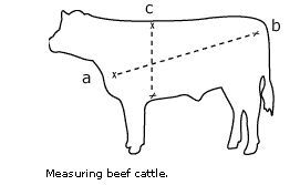 How to estimate cow weight by measurements, for those without a livestock scall/ small scale homesteader- from Tractor Supply