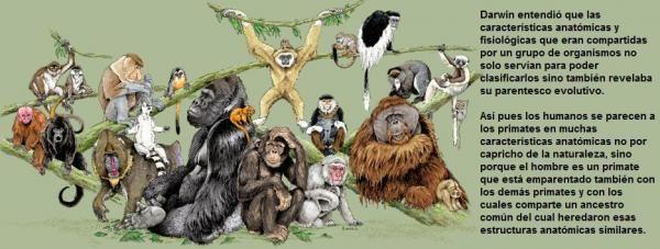 Sin Duda El Punto Mas Importante Dentro De La Obra Y Por Lo Que Es Mas Conocida La Teoria Es La Seleccion Natural Teoria De Darwin El Origen Biologia Moderna