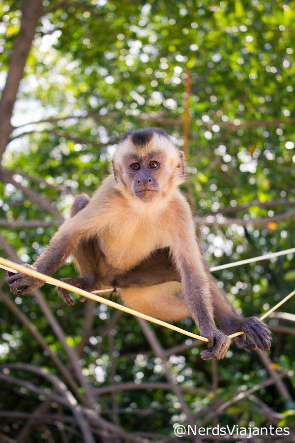 Vassouras - Lar dos Macacos-Prego | Nerds Viajantes