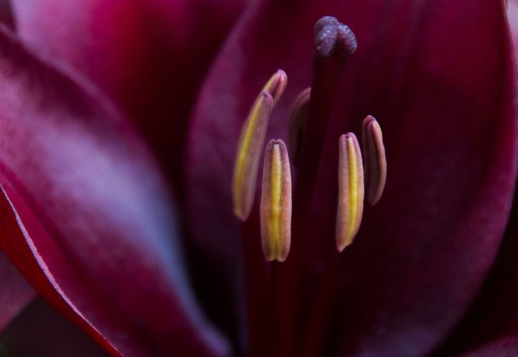 Black lotus New Zealand