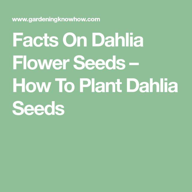 Facts On Dahlia Flower Seeds – How To Plant Dahlia Seeds