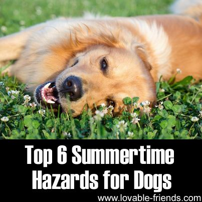 Top 6 Summertime Hazards for Dogs ►► http://www.lovable-friends.com/top-6-summertime-hazards-for-dogs/?i=p