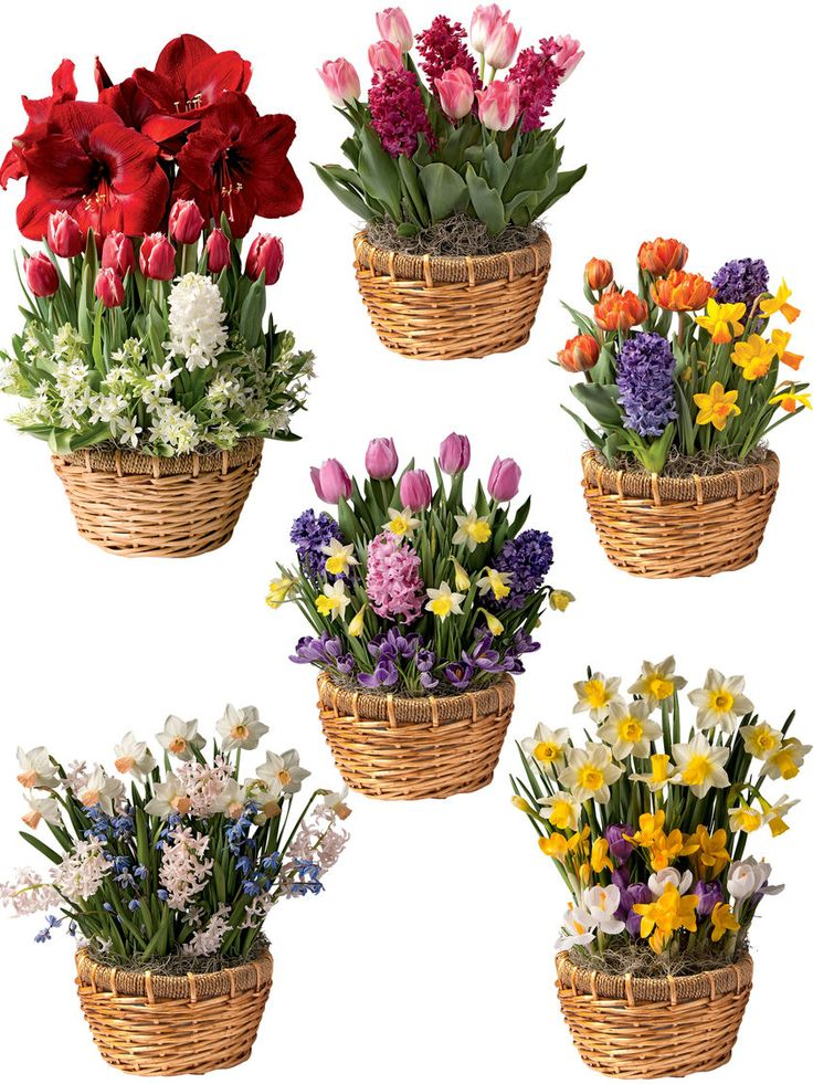Monthly Flower Delivery: 6 Months of Blooms | Gardener's Supply