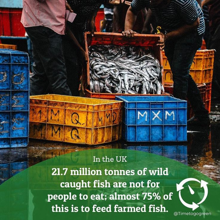 21.7 million tonnes of wild caught fish are not for people to eat; almost 75% of this is to feed farmed fish. . Another example of inefficient food production. . Photo by Aman Bhargava . #fishing #SustainableFacts #tuna #foodie #ethical #saveourseas #bycatch #oceanconservation #wastenot #seawise #nobluenogreen #EcoFacts #diet #ThinkGreen #findingnemo #seafood #DYK #dolphin #fishtotable #health #shark #surfandturf #ProtectWhatYouLove #plastickills #oceanfish #overfishing #strawssuck…