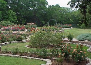 Mabel Davis Rose Garden - Zilker Park