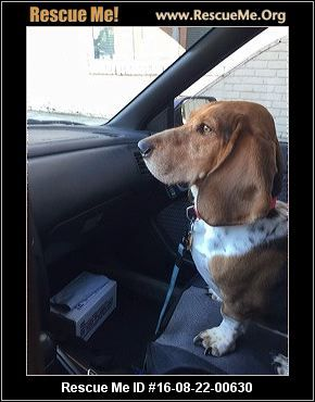 """Click here to view Basset Hound Dogs for adoption, or post one in need."" ― ♥…"