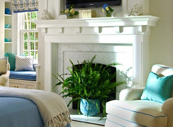 home decor plants living room