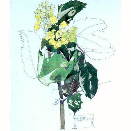 Charles Rennie Mackintosh. Berberis, Walberswick 1915.
