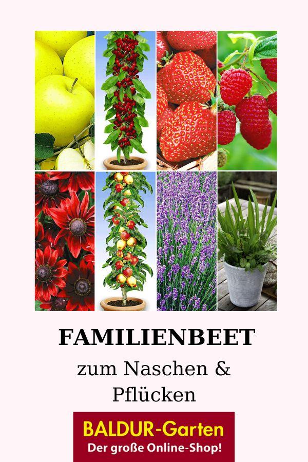 Familienbeet Zum Naschen Pflucken Baldur Garten Pflanzen Bienenfreundliche Pflanzen Beerenfruchte