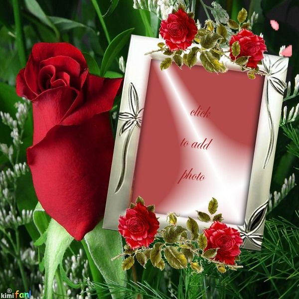 Click to add a photo to this red rose frame. It was made on imikimi.com by the artist Alma50. Imikimi is a free photo framing site.   #friends #love #red #rose