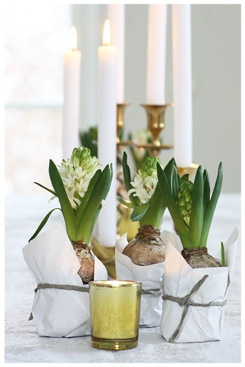 hyacinth/lavender wrap in white paper tissue and tight with ribbon