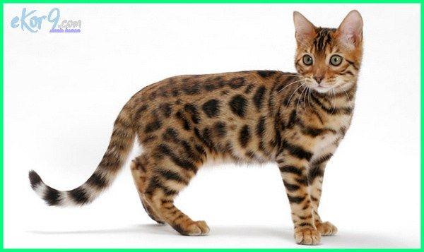 Download 100+  Gambar Kucing Yang Cantik Lucu Lucu