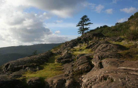 Hike Mt. Finlayson
