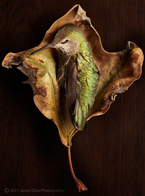 175 Best Hummingbird Heaven Images On Pinterest