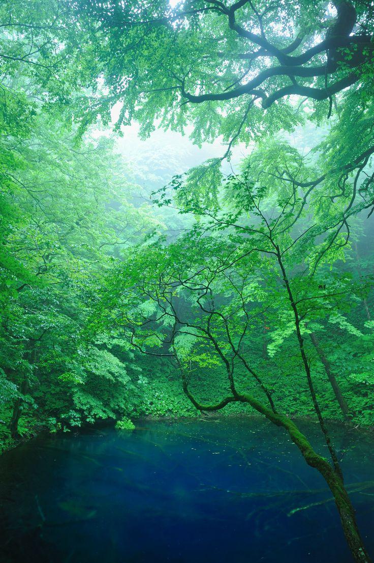 青池「十二湖」(青森県深浦町)