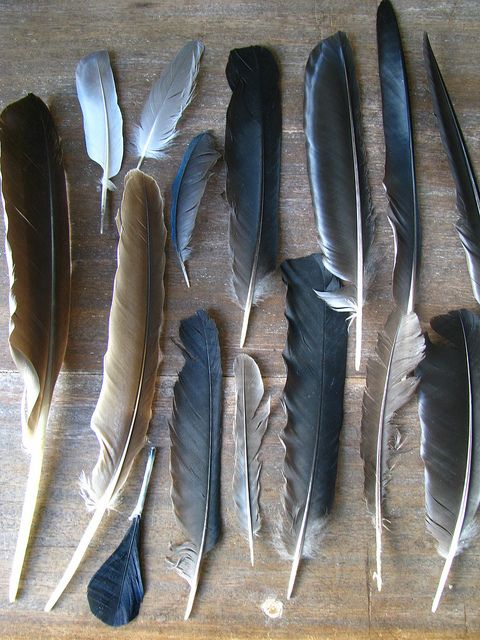 A feather is a gift from the spirit world. If you see one, undamaged by the elements, pick it up. You will be blessed...