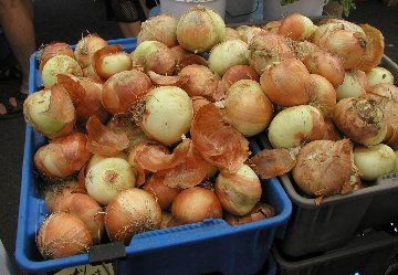 how to store cut onions overnight