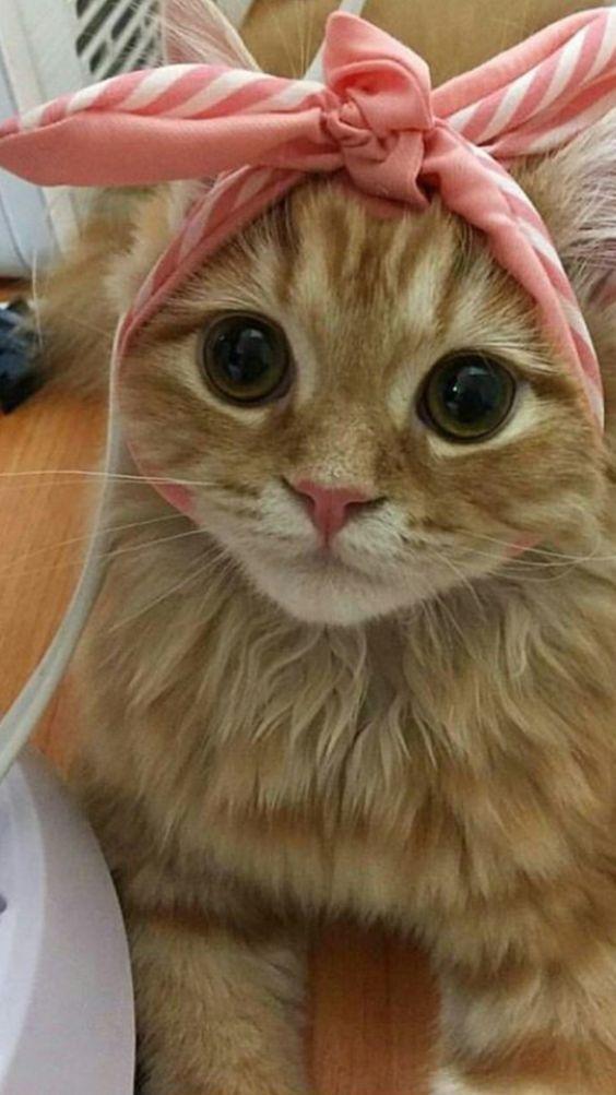 I gots style!!!! I'm so lovely!!!!❤️❤️❤️❤️❤️❤️ kitties!!!!!