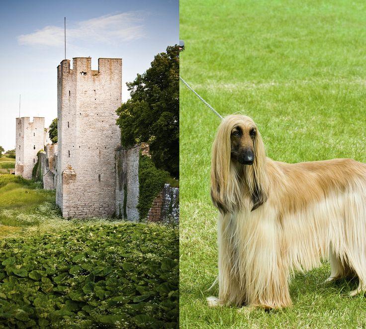 I år är Gotland Dog Show förlagd till helgen den 6 och 7 augusti. Lördagen den 6:e är nationell utställning och på söndagen den 7:e är det internationell utställning.